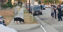 La policia mata a un perro en plena calle, video shock en California