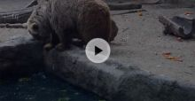 VIDEO: Un oso rescata a un pajarillo